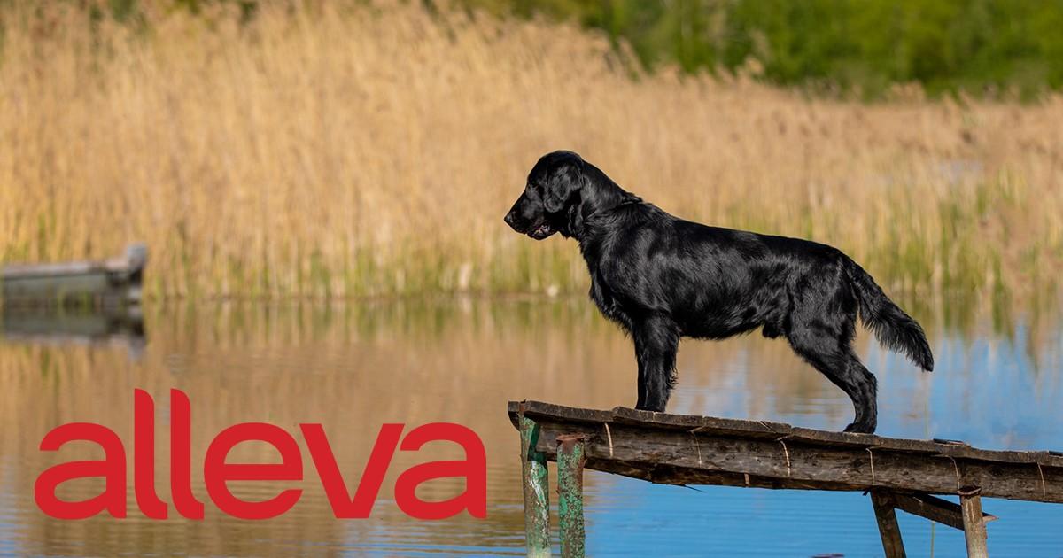 Diusa Pet – Alleva храна за миленици