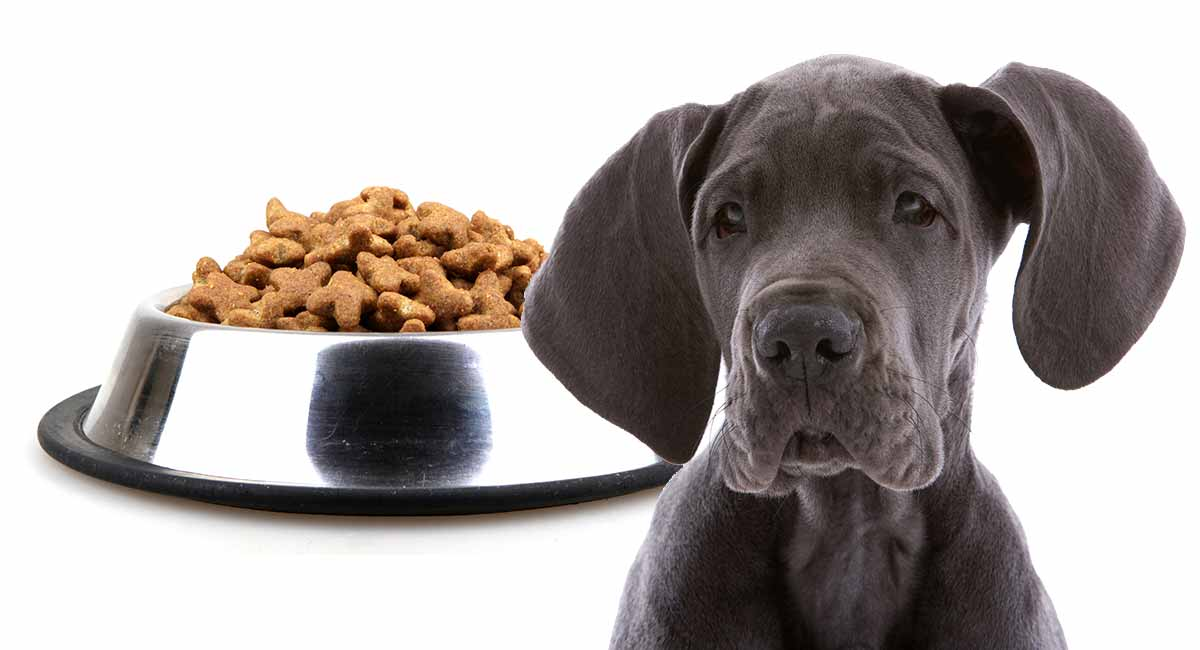 Нутриционистички потреби на големите и гигантските раси на кученца