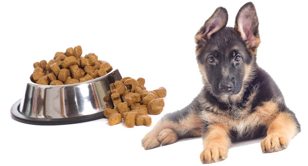 Koга треба да му смени храната на кученце германски овчар со храна за возрасни кучиња
